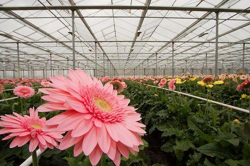 Aanneembedrijf zoekt opdrachtgevers in tuinbouw